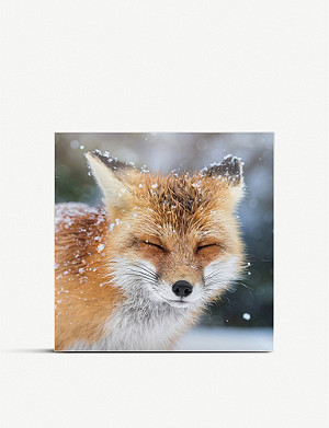 THE GREAT BRITISH CARD COMPANY The Face of Winter Christmas cards pack of 16