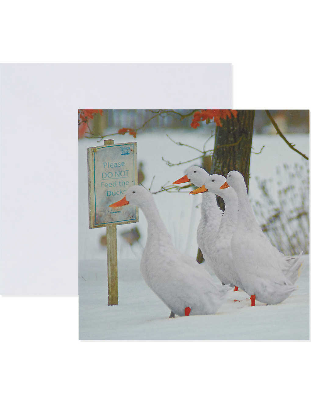 The Great British Card Company Set Of 10 Geese In Snow Christmas Cards Selfridges Com