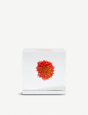 THE CONRAN SHOP Usagi no Nedoko globe amaranth resin cube