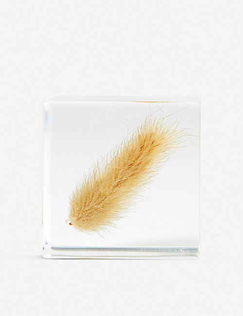 THE CONRAN SHOP Usagi no Nedoko Bunny Tail Grass Sola Cube