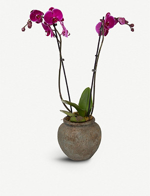MOYSES STEVENS Pink orchid