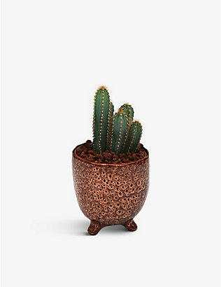 YOUR LONDON FLORIST: Exclusive Cacti potted plant