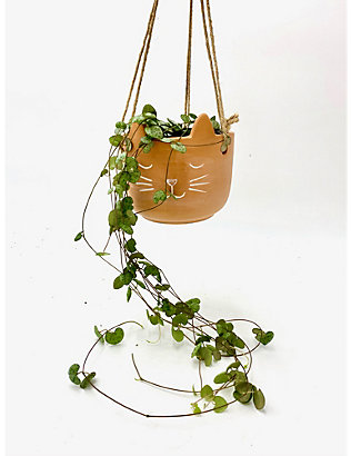 CANOPY PLANTS: Ceropegia Woodii plant with ribbed ceramic pot