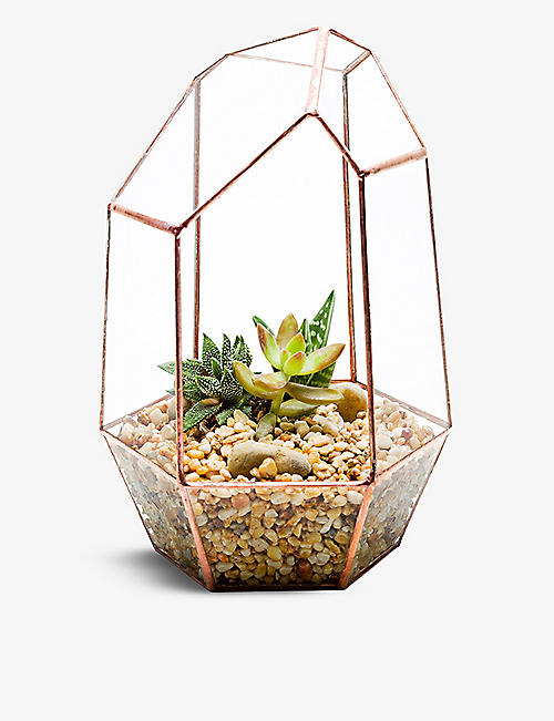 THE URBAN BOTANIST: Gem copper terrarium