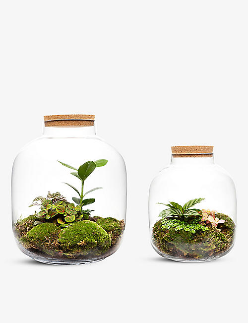 THE URBAN BOTANIST: Mega Grande Ecosystem DUO set