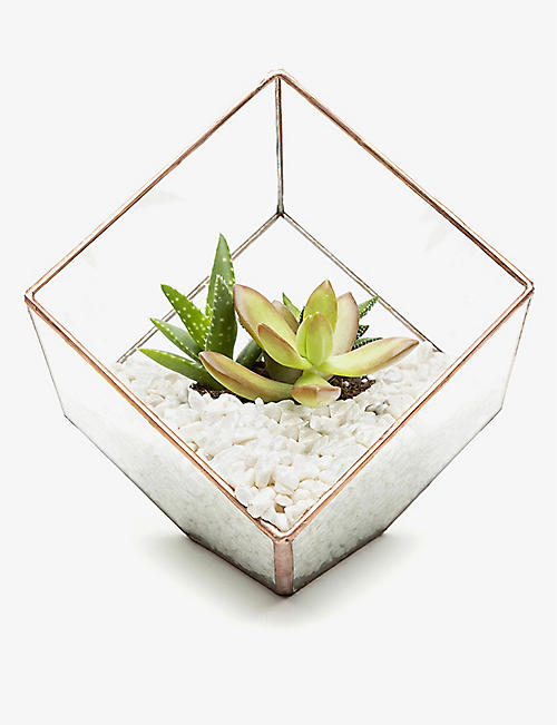 THE URBAN BOTANIST: Mini Cube copper terrarium
