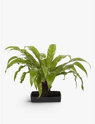 YOUR LONDON FLORIST: Exclusive Lava Rock plant with ceramic pot