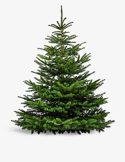 MOYSES STEVENS: Premier Nordmann Fir Grade A tree 6ft London delivery only