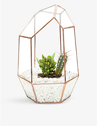 THE URBAN BOTANIST: Gem copper cacti terrarium