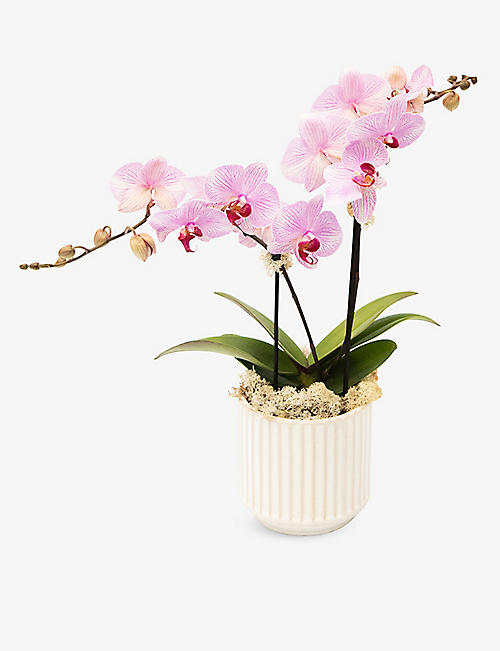 YOUR LONDON FLORIST: Pink Lipstick Orchid with ceramic pot