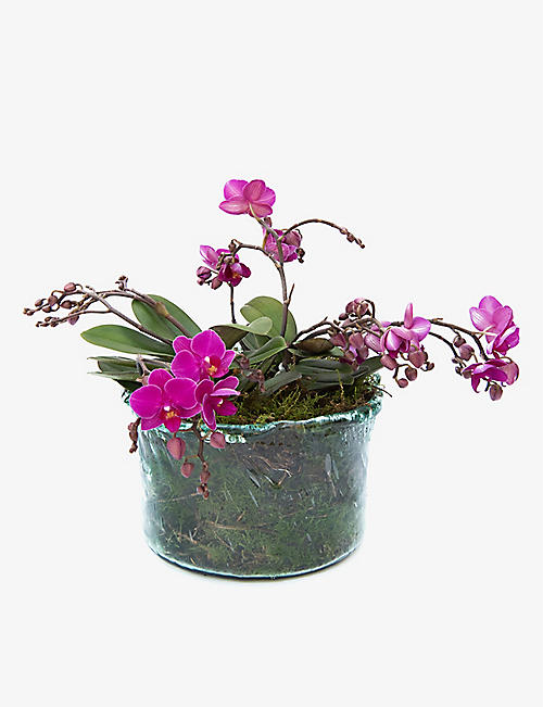 YOUR LONDON FLORIST: Wild Kolibri Orchid Planter with glass pot