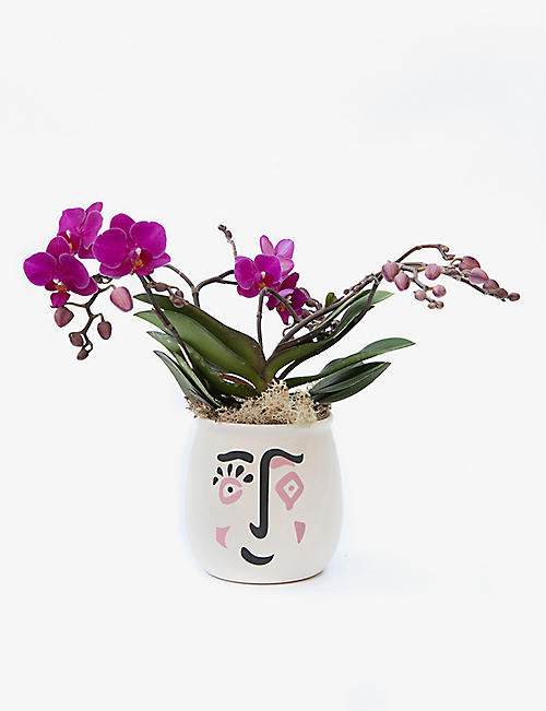 YOUR LONDON FLORIST: Kolibri Orchid with ceramic pot