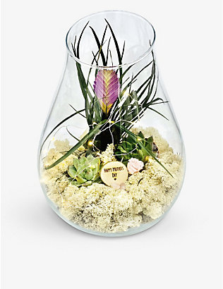 THE URBAN BOTANIST: Mother's Day Teardrop glass succulent garden