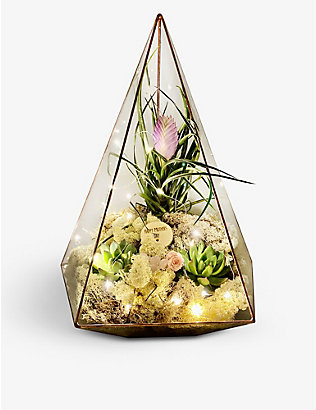 THE URBAN BOTANIST: Mother's Day Supersize Jewel copper terrarium