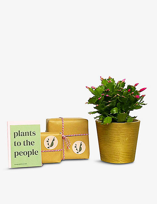 CANOPY PLANTS: Cactus with hand-painted ceramic pot